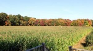 Get Lost In This Awesome 5-Acre Corn Maze In Rhode Island This Autumn