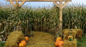 Get Lost In This Awesome 8-Acre Corn Maze In North Dakota This Autumn