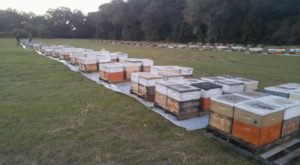 Head To This Unique Honey Farm In Florida For A Bee-autiful Adventure