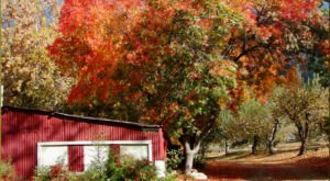 You'll Be Happy To Hear That Southern California's Fall Foliage Is Expected To Be Bright And Bold This Year