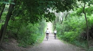 The Shady, Creekside Trail In Michigan You'll Want To Hike Again And Again