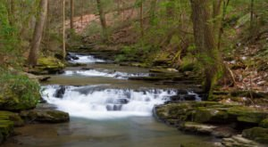 The Shady, Creekside Trail In Tennessee You'll Want To Hike Again And Again
