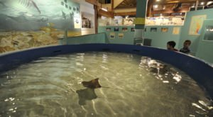 Not Many People Know About This Marine Museum Right Here In Maryland
