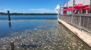 State Of Emergency Declared As Toxic Red Tide Sweeps Along Florida's Coast
