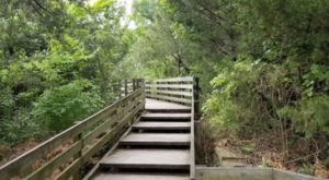 This Illinois Park Has Endless Boardwalks And You'll Want To Explore Them All
