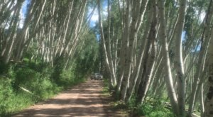 5 Positively Magical Tree Tunnels In Colorado That Will Take Your Breath Away