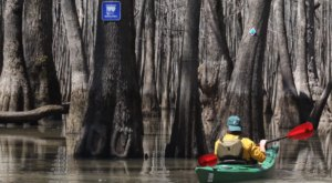 You Can Float Or Drive Through This Unexpectedly Beautiful Arkansas Bayou