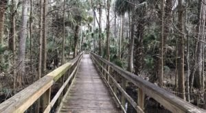 The Underrated River Trail In Florida You'll Want To Hike Over And Over Again
