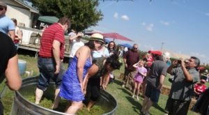 This Grape Stomp Festival In Oklahoma Is The Perfect End To Summer