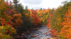 You'll Be Happy To Hear That West Virginia's Fall Foliage Is Expected To Be Bright And Bold This Year