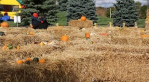 The Unique Scarecrow Festival In Michigan You Won't Find Anywhere Else
