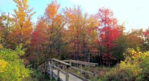 The Awesome Hike That Will Take You To The Most Spectacular Fall Foliage In Buffalo