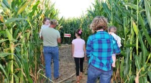 Get Lost In Exeter Corn Maze This Autumn, An Awesome 8-Acre Corn Maze In Missouri