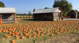 6 Pumpkin Patches Around Nashville That Will Put You In The Mood For Fall