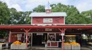 Nothing Says Fall Is Here More Than A Visit To Florida's Charming Pumpkin Farm