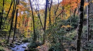 This Easy Fall Hike In Georgia Is Under 2 Miles And You'll Love Every Step You Take