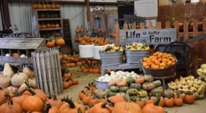 A Trip To This Vibrant Pumpkin Patch Near Austin Will Put You In The Mood For Fall