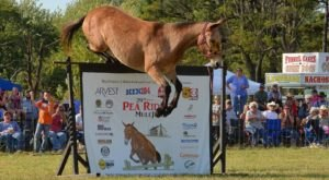 There's Nothing More Arkansan Than This Annual Mule Jump