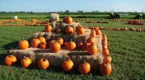 Take A Day Trip To This Lovely Fall Festival And Pumpkin Patch Near Austin