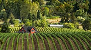 3 Underrated Wine Regions Around The U.S. You Simply Must Visit