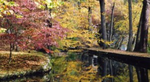 You'll Be Happy To Hear That Delaware's Fall Foliage Is Expected To Be Bright And Bold This Year