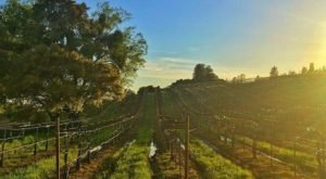 This Humongous Vineyard In Northern California Is Unlike Any Other You've Seen