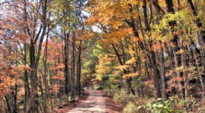 You'll Be Happy To Hear That Arkansas' Fall Foliage Is Expected To Be Bright And Bold This Year