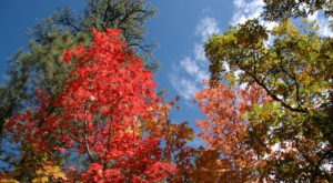You'll Be Happy To Hear That New Mexico's Fall Foliage Is Expected To Be Bright And Bold This Year