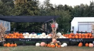 A Trip To This Charming Nebraska Pumpkin Patch Makes For An Excellent Fall Outing
