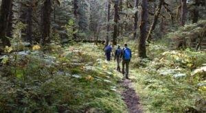 Take This Rainforest Trail In Alaska For An Enchanting Adventure