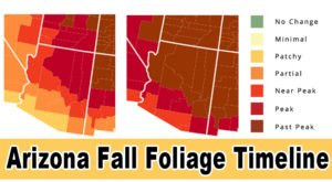 You'll Be Happy To Hear That Arizona's Fall Foliage Is Expected To Be Bright And Bold This Year