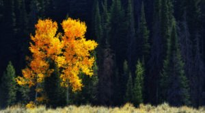 The Awesome Hike That Will Take You To The Most Spectacular Fall Foliage In Wyoming
