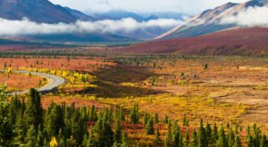 You'll Be Happy To Hear That Alaska's Fall Foliage Is Expected To Be Bright And Bold This Year