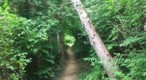 The Shady, Creekside Trail In Indiana You'll Want To Hike Again And Again