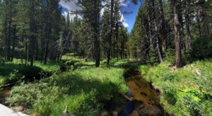 The Shady, Creekside Trail In Wyoming You'll Want To Hike Again And Again