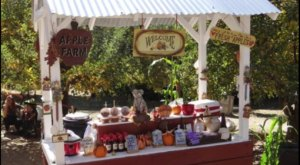 Nothing Says Fall Is Here More Than A Visit To Southern California's Charming Apple Farm