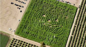 Get Lost In This Awesome 5-Acre Corn Maze In Southern California This Autumn