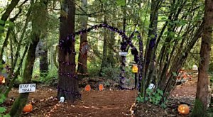Take This Halloween Trail In Oregon For A Fall You'll Never Forget