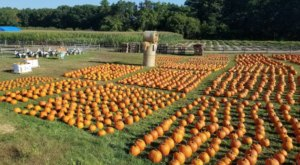These 10 Charming Pumpkin Patches In Massachusetts Are Picture Perfect For A Fall Day