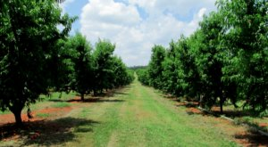Visit This Alabama Orchard For The Best Apple Cider You've Ever Tasted