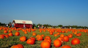 These 6 Pumpkin Patch Hayrides In Texas Are The Definition Of Fall Charm