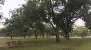 Stroll Through The Pecan Groves At This Majestic 300-Acre Park Near Austin