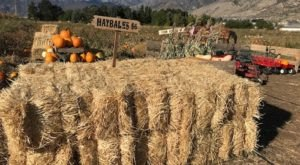 Make Your Autumn Awesome With A Visit To Utah's Little Known Pumpkin Park
