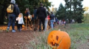 The Enchanting Halloween Hike In Oregon Your Whole Family Will Love