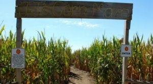 Get Lost In This Awesome 10-Acre Corn Maze In Nebraska This Autumn