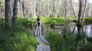This New Hampshire Park Has Endless Boardwalks And You'll Want To Explore Them All