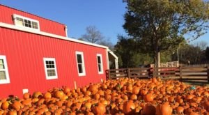 It's Easy To See Why This Nashville Pumpkin Patch Was Ranked The Best In The State