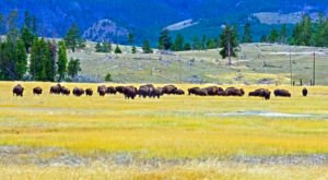 The World's First Zero Waste Travel Adventure Is Coming Soon To Yellowstone