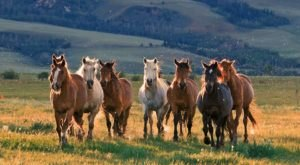 The One-Of-A-Kind Park In Wyoming Where You Can See Wild Horses Up Close