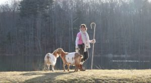 Go Hiking With Goats In Connecticut For An Adventure Unlike Any Other